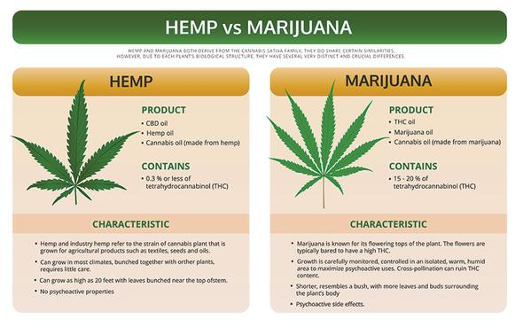 KaiQi CBD oil specialist in UK. Cannabidiol oil supplement. Hemp vs Marijuana diagram.