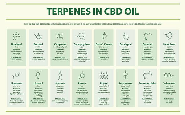 CBD oil UK. KaiQi. Cannabidiol oil supplement. Terpenes in CBD oil diagram.