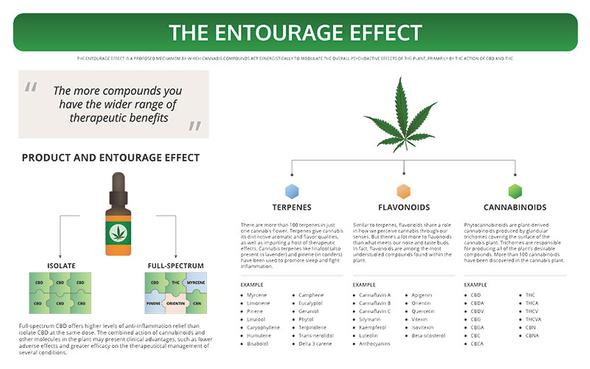 CBD oil UK. Cannabidiol oil supplement. The entourage effect of CBD. KaiQi.